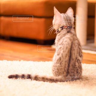 座っている子猫の後ろ姿の写真・画像素材[3902023]