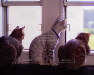 窓から景色を見ている猫の写真・画像素材[3903658]