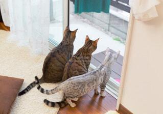 窓から外を見る猫3匹の後ろ姿の写真・画像素材[3912215]