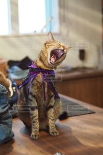 テーブルの上に座ってあくびをする猫の写真・画像素材[3927688]