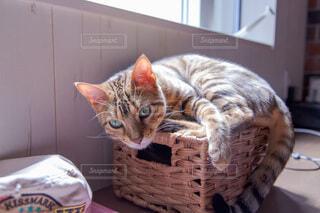 かごの上に乗る猫の写真・画像素材[3934832]
