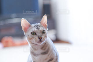 猫のクローズアップの写真・画像素材[3939555]