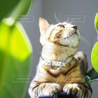 テレビの上に座っている猫の写真・画像素材[3942695]