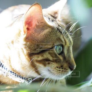 猫のクローズアップの写真・画像素材[3946334]