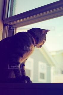 窓の前に座っている猫の写真・画像素材[3946346]