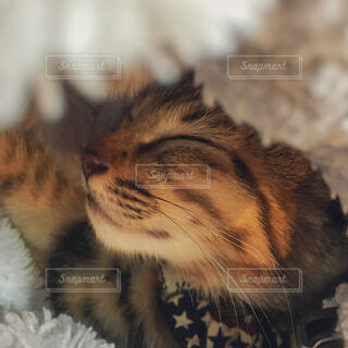 子猫の寝顔の写真・画像素材[3962556]