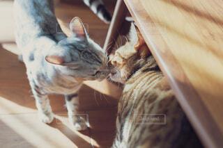 猫同士の朝の挨拶の写真・画像素材[3971572]