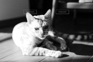 床の上で横たわる猫の写真・画像素材[3972218]