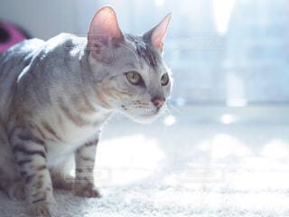 猫のクローズアップの写真・画像素材[3972703]