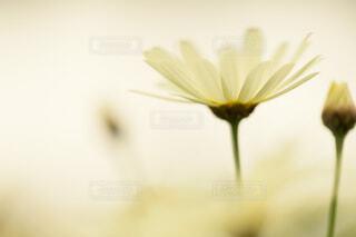 花のクローズアップの写真・画像素材[3990742]
