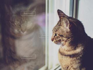 窓の前に座っている猫の写真・画像素材[3990985]