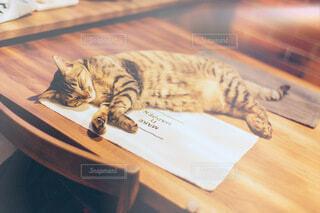 テーブルの上で寝ている猫の写真・画像素材[4024346]