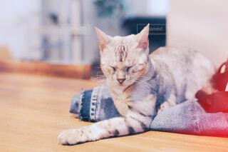 テーブルの上でくつろぐ猫の写真・画像素材[4027467]