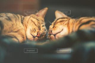2匹で仲良く寝ている猫の写真・画像素材[4045057]