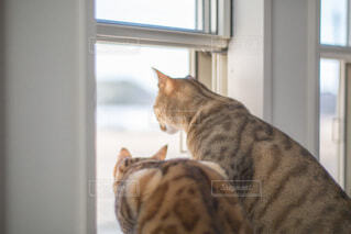 窓の前に座っている猫の写真・画像素材[4053745]