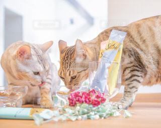 食事中の猫の写真・画像素材[4238744]