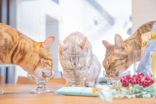 食事中の猫の写真・画像素材[4238764]