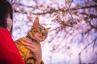 猫を抱いている人の写真・画像素材[4293205]