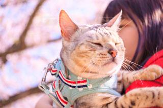 猫を抱いている人の写真・画像素材[4321646]