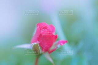花のクローズアップの写真・画像素材[4389368]