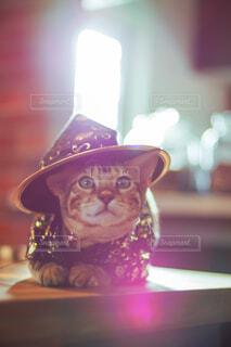 カメラ目線の猫の写真・画像素材[4440089]