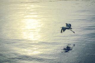 海の上を飛んでいる鳥の写真・画像素材[4442544]