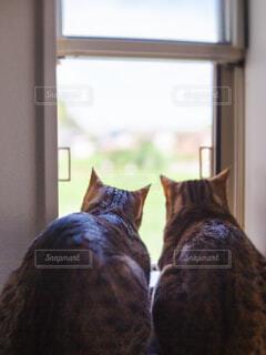 窓の前に座っている猫の写真・画像素材[4613345]