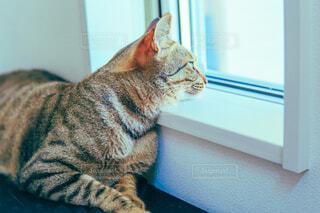 窓の前に座っている猫の写真・画像素材[4613349]