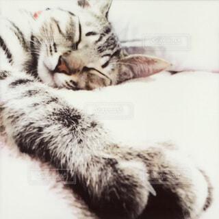 ベッドに横たわる猫の写真・画像素材[4714931]