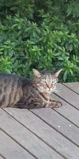 昼下がりのネコの写真・画像素材[3907391]