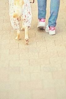 愛犬と散歩の写真・画像素材[4195208]