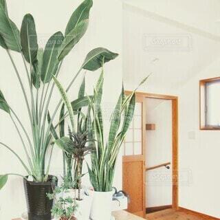 観葉植物の写真・画像素材[4358895]
