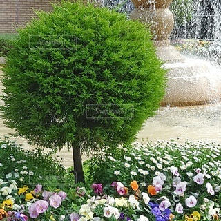 噴水前の花壇の写真・画像素材[4367409]
