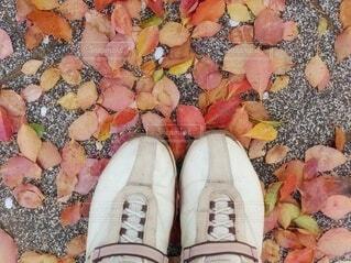 桜の季節の枯れ葉の写真・画像素材[4418188]