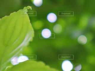 緑色に包まれた庭の写真・画像素材[4431690]