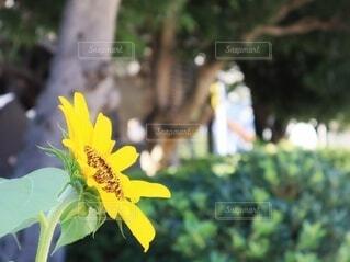 都会の向日葵の写真・画像素材[4671145]
