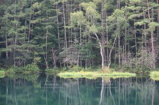 水面の森の写真・画像素材[3896596]