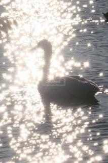 冬の水面の写真・画像素材[3896721]