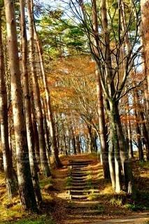 木漏れ日の階段の写真・画像素材[3897849]