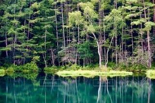 水面の森2の写真・画像素材[3897857]