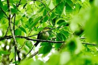 小鳥との出会い2の写真・画像素材[3897854]