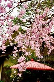 日本の春2の写真・画像素材[3897859]