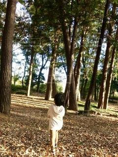 秋の森の写真・画像素材[3917036]