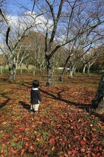 秋と冬の間の写真・画像素材[3917038]