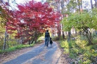 紅葉散歩の写真・画像素材[3917039]