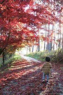 赤い絨毯の写真・画像素材[3917088]
