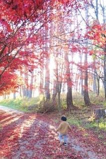 秋の道の写真・画像素材[3917087]