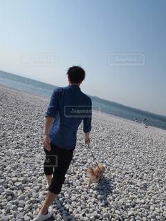 犬 - No.456574