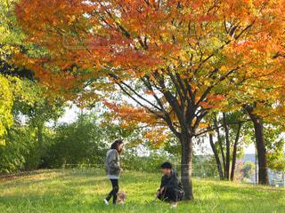 木の隣に立っている男 - No.852934