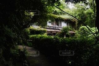 森の中に佇むの写真・画像素材[3909662]